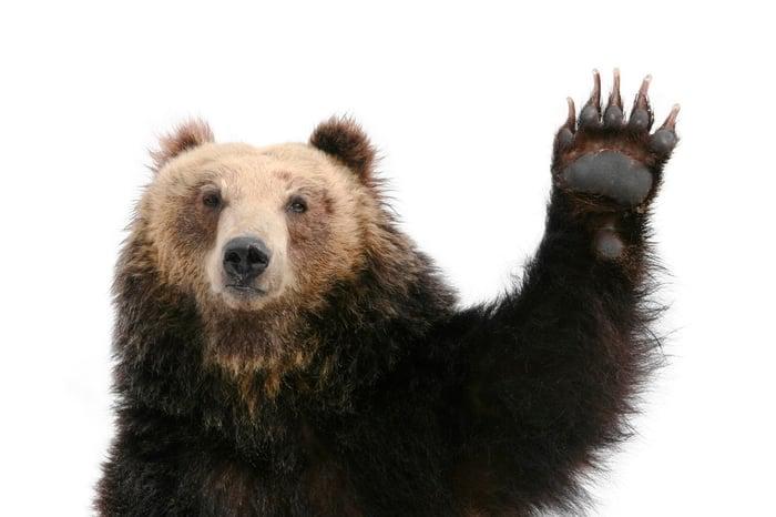 A bear raising a paw.