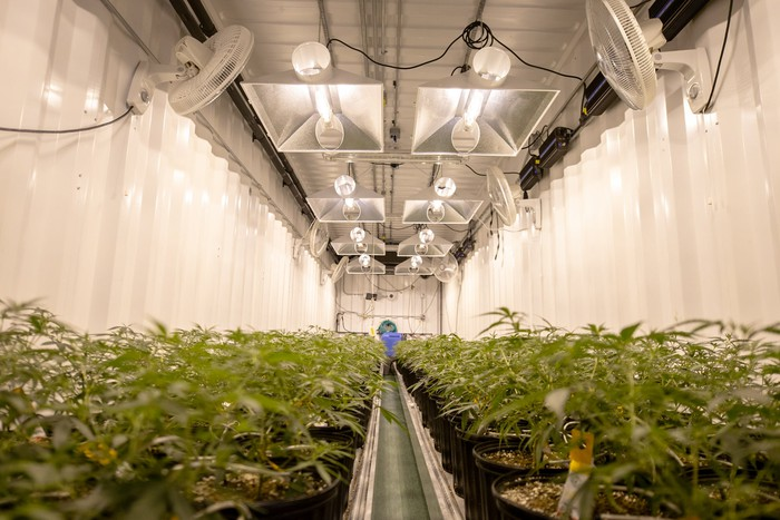 A cultivation facility with cannabis plants inside.