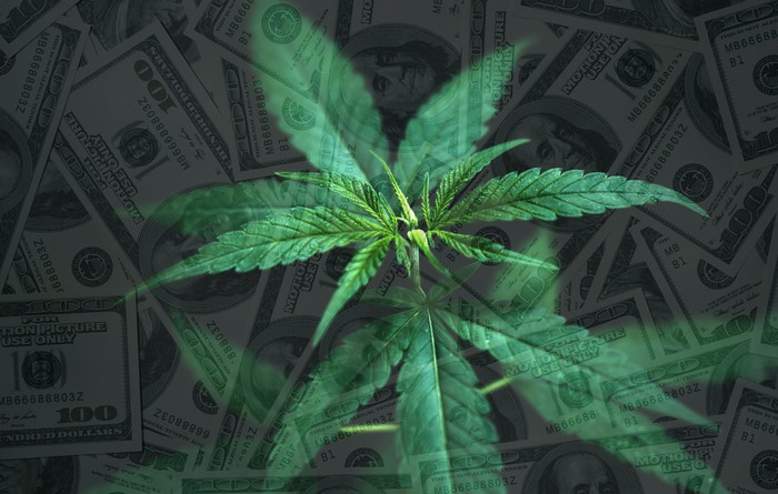 Cannabis plant with a background of $100 bills.