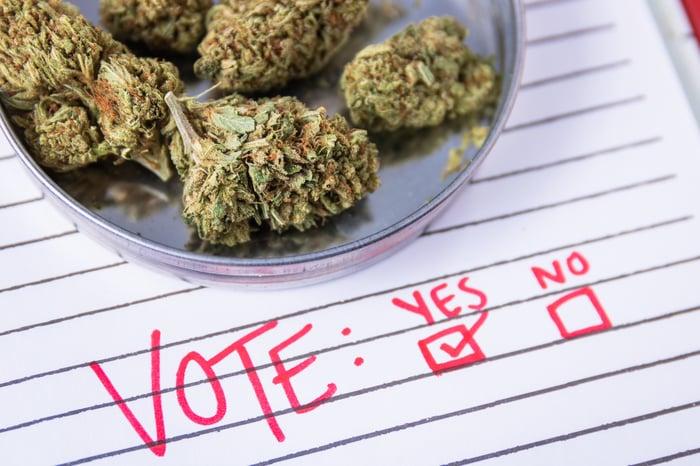 Paper ballot under bowl of cannabis buds.