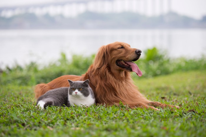 A dog and cat relaxing on a lawn.