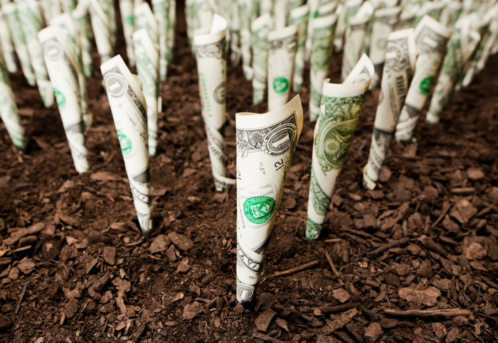 A crop of rolled up dollar bills is poking up out of soil.