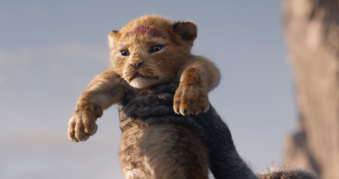 A lion cub being held up for all to see.