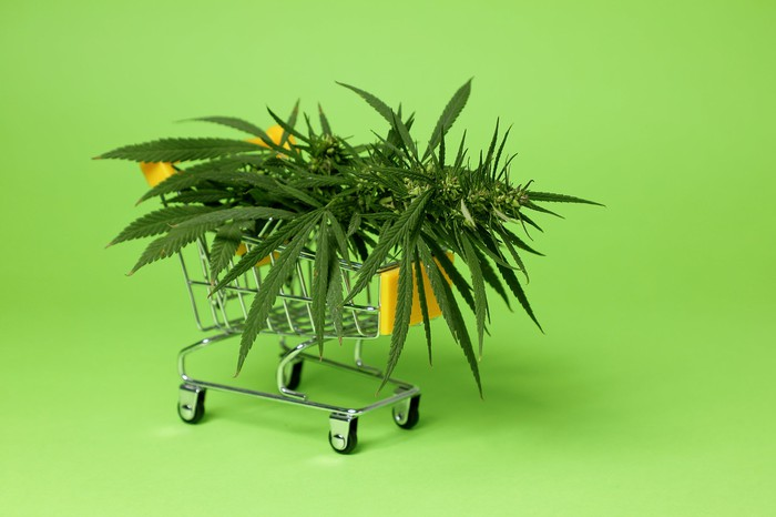 A miniature shopping cart containing marijuana leaves set against a light green backdrop.