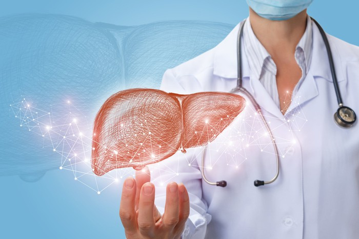 Image of a liver above hand of a physician.