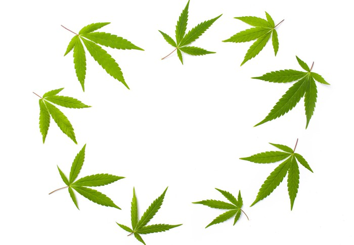 Cannabis leaves in a circle
