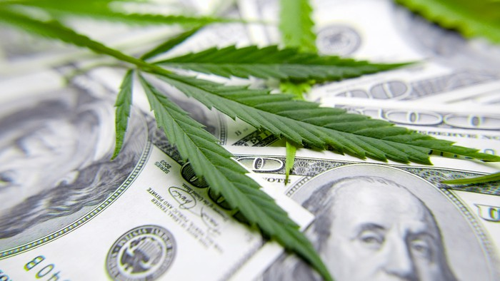 Cannabis leaves on top of $100 bills