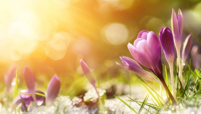 Flowers in bloom.