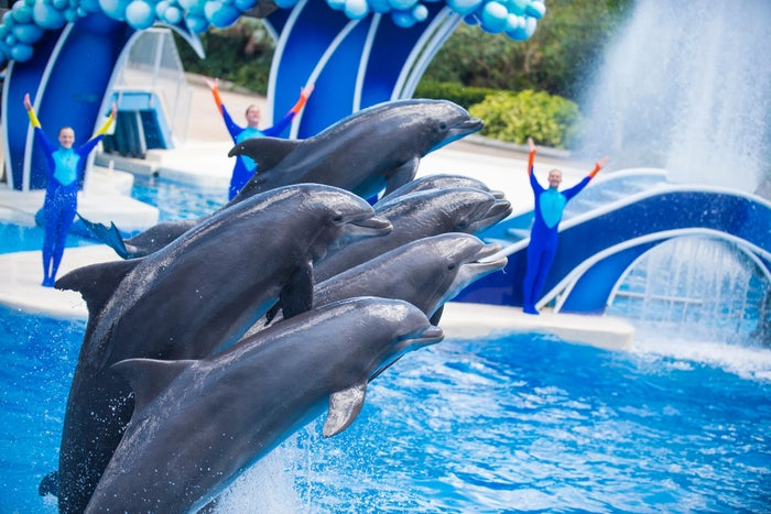 Dolphins performing at SeaWorld Orlando.