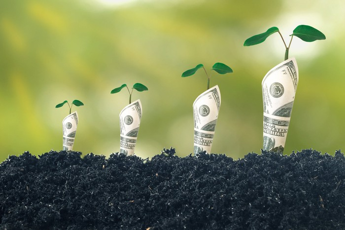 One hundred dollar bills rolled and planted in the soil with saplings growing out of them