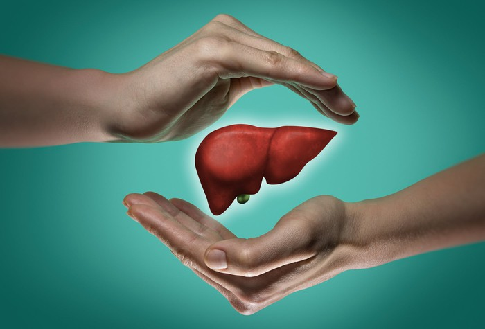 Image of two hands cusping a minature human liver.