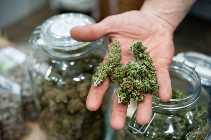 A shopkeeper shows off a handfull of cannabis.