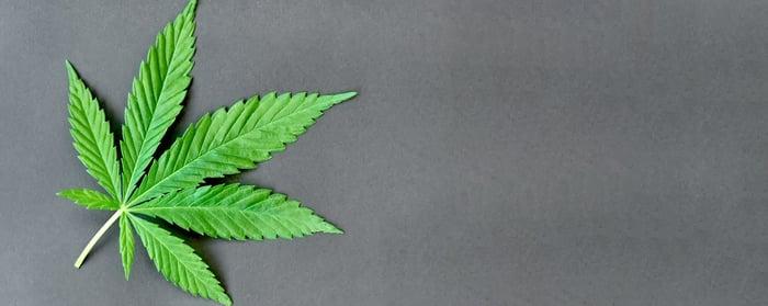 A green cannabis leaf against a grey background.