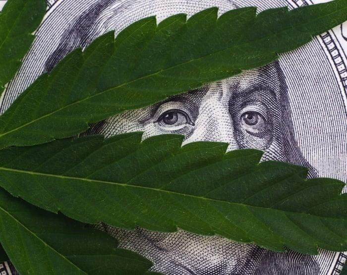 Ben Franklin hiding under a pot leaf.