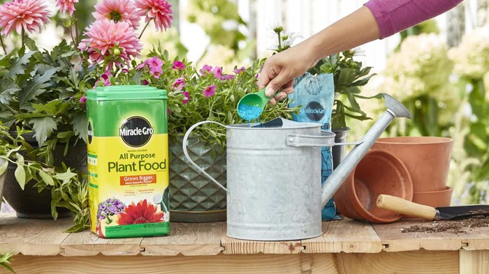 Scotts Miracle-Gro Plant Food being added to a watering can.