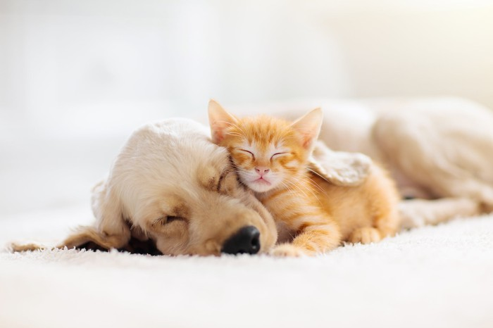 A dog and a cat resting together.