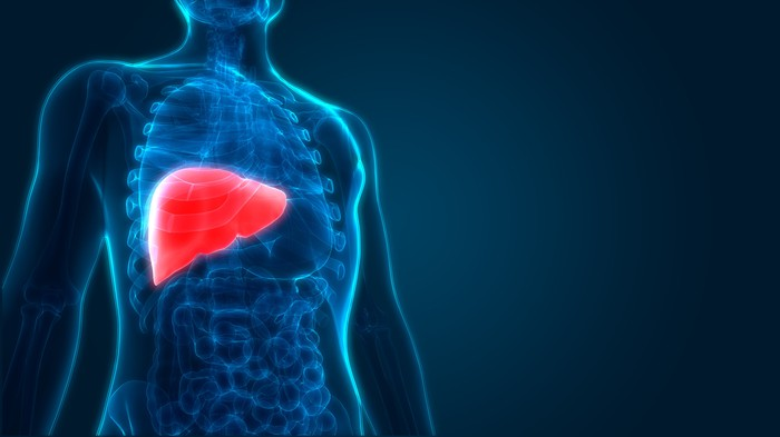 A 3D holographic image of a human body with the liver highlighted in red.