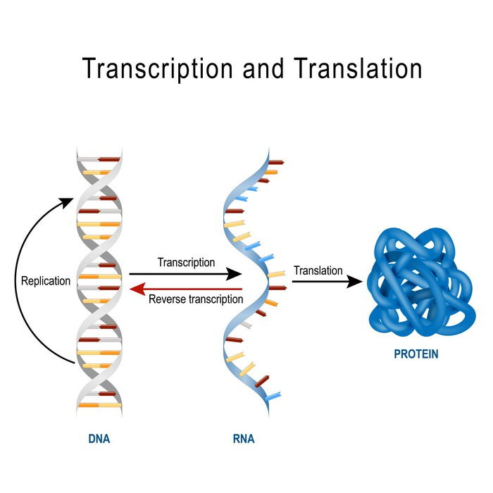 DNA and RNA strands