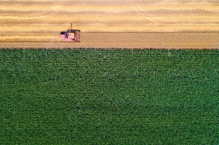 A bird's eye view of a tractor in a corn field.
