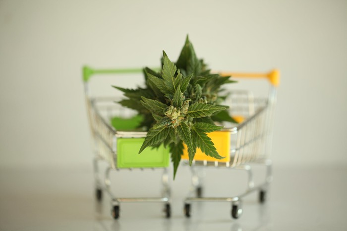 Two tiny shopping carts with a cannabis plant on top of them