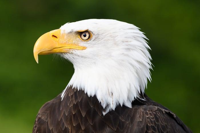 Profile pic of a bald eagle