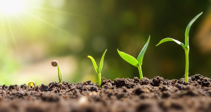 The sun shines on a row of seedlings in the dirt, each one successively taller, representing a rising stock chart.