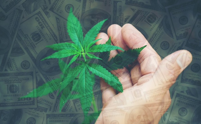 Hand next to cannabis plant with $100 bills in background