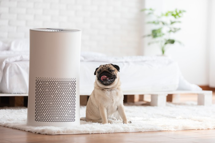 Pug sitting next to air purifier in cozy white bedroom.