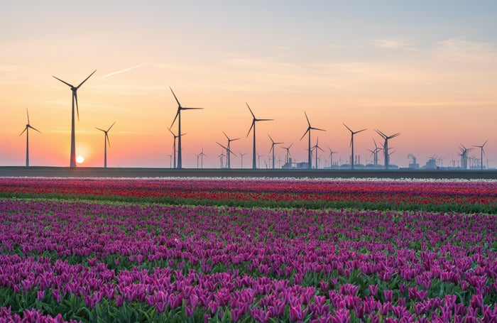 Dozens of wind turbines in a field of flowers with the sun setting in the background