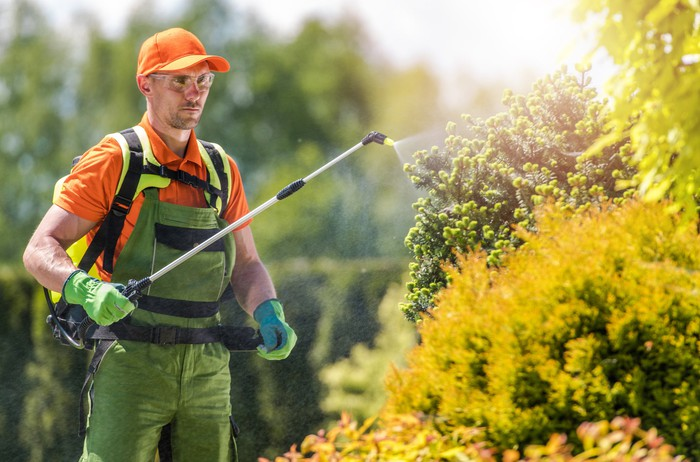 worker spraying bushes with weedkiller chemical