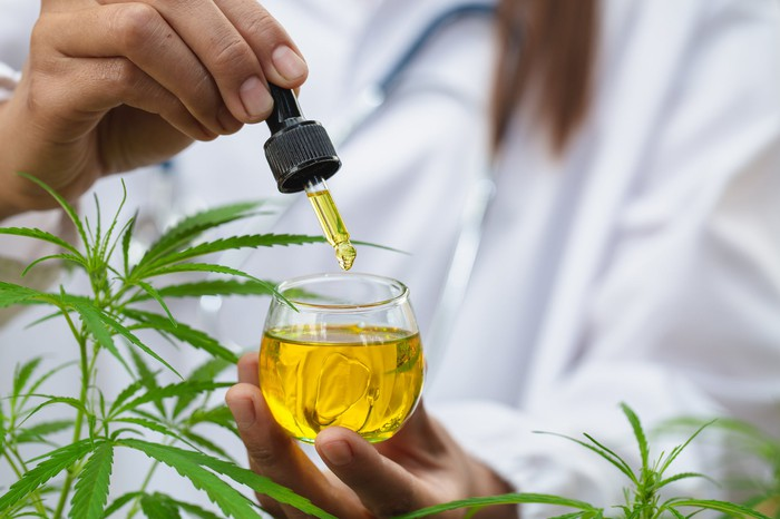 Cannabidiol oil as medical cannabis
