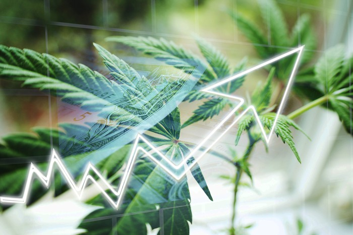 A rising stock chart is superimposed on a cannabis plant.