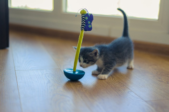 Kitten approaching a wobbling toy shaped like a boat with a long mast