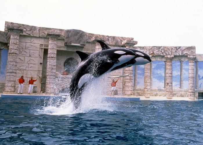 An orca show.
