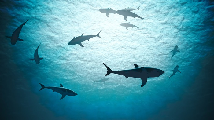 view from below of sharks swimming in circles