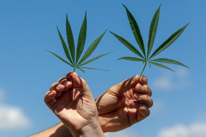 Hands holding two cannabis leaves with a blue sky in the background.