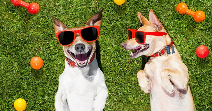 Two happy dogs in sunglasses lying on a lawn surrounded by toys
