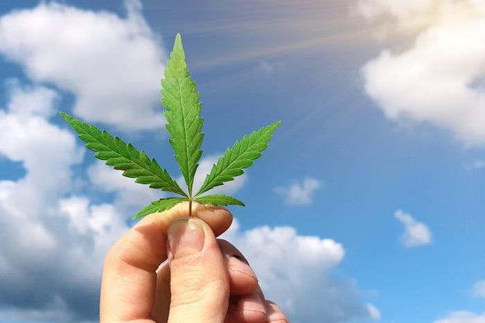 Cannabis stocks to choose.