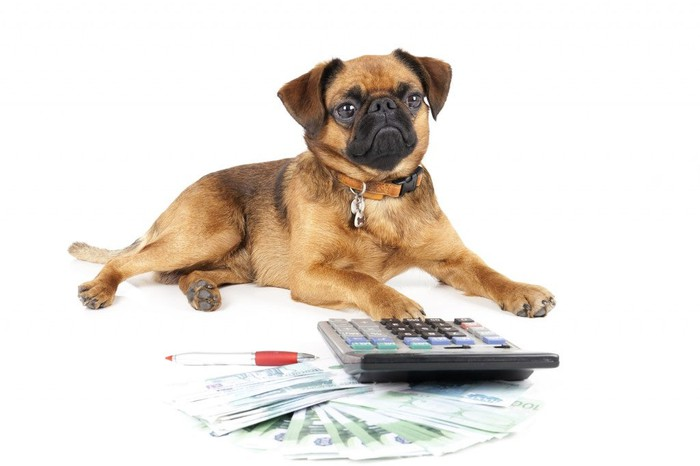 A dog resting in front of a calculator, pen, and currency.