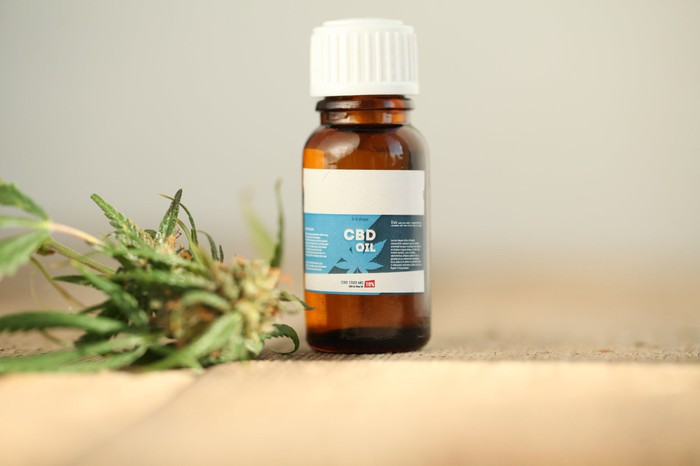 CBD oil bottle next to hemp plant