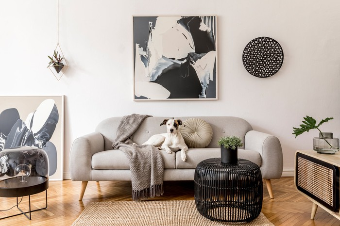 room with modern home furnishings with dog on the couch