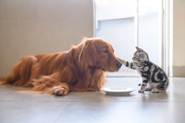 Cute dog and kitten
