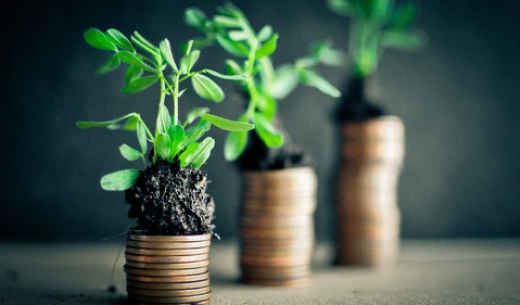 Plants Growing On Top of Coins Money Growth Getty