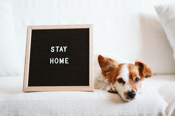 Dog with a stay home sign.