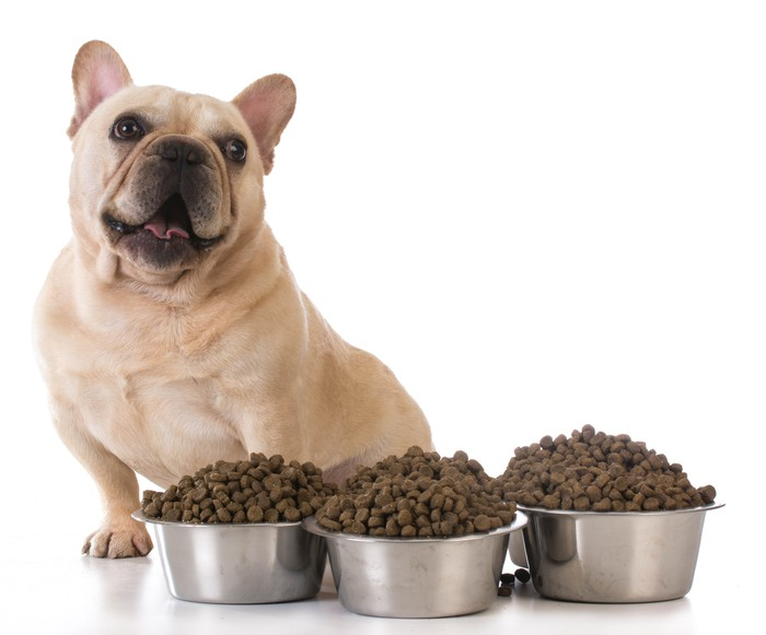 A French bulldog with a large supply of kibble in new metal dog bowls.