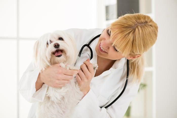 A veterinarian examining a happy small white dog.
