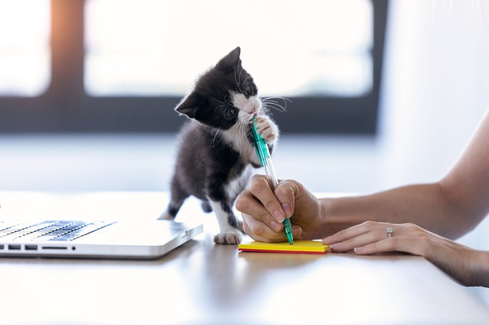 kitten playing with pen as woman writes on yellow sticky pad