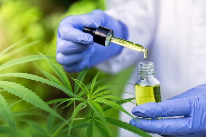 Gloved hand holding bottle of drug derived from marijuana plant
