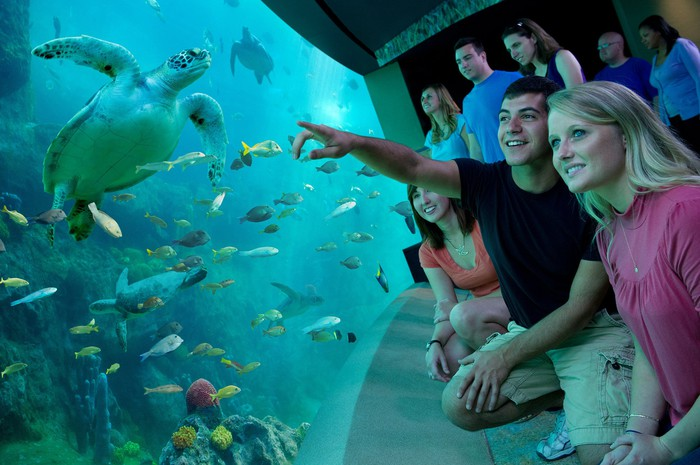 Guests in pre-COVID-19 times watching turtles in a turtle attraction.
