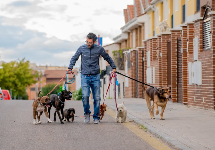 A professional dog walker walking six dogs of different breeds and sizes down the street near brick-fronted houses.